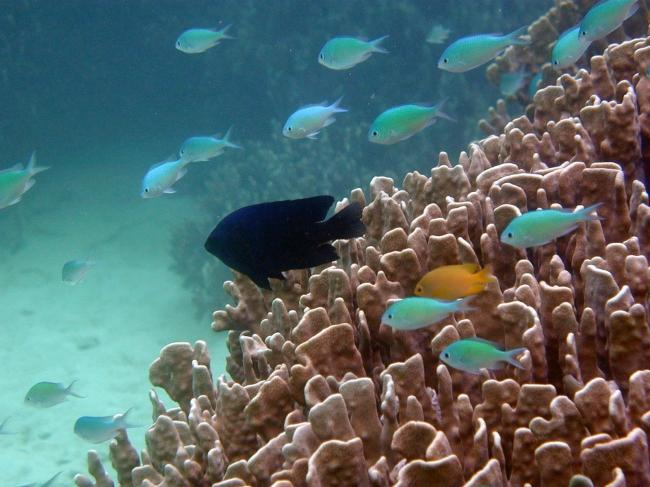 沖縄の開発計画に待った!サンゴやウミガメの環境を破壊する恐れ