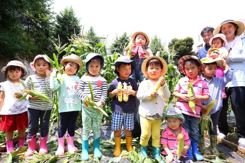 渋谷区恵比寿区民菜園で、昨年7月にトウモロコシの収穫